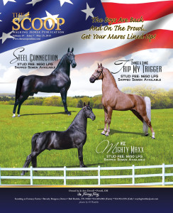 FC_Dowell stallions